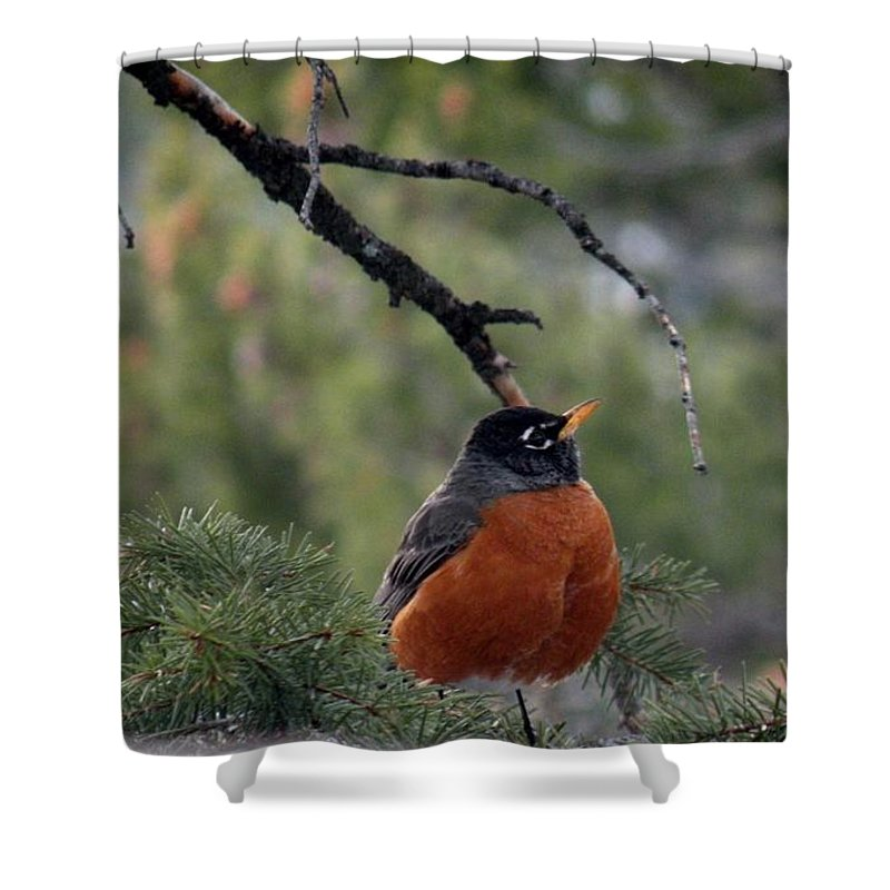 Bird Photos Shower Curtain featuring the photograph Robin by Saundra Lane Galloway