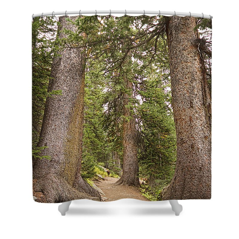 Colorado Shower Curtain featuring the photograph Rocky Mountain Forest Walk by James BO Insogna