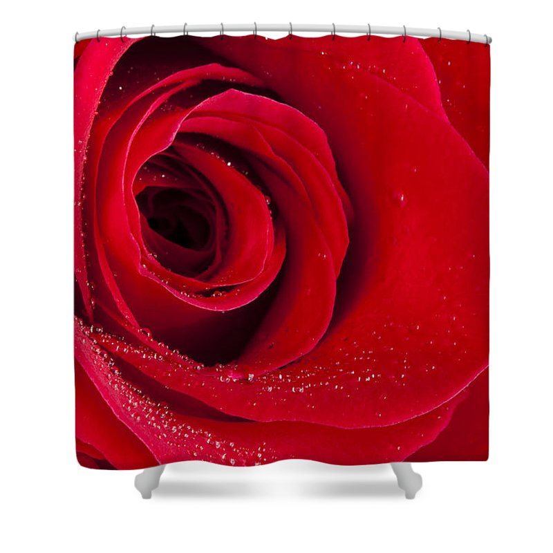 Flower Shower Curtain featuring the photograph Rose Macro Wet 1 C by John Brueske