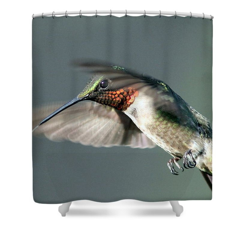 Hummingbird Shower Curtain featuring the photograph Ruby-throated Hummingbird - Hover by Travis Truelove