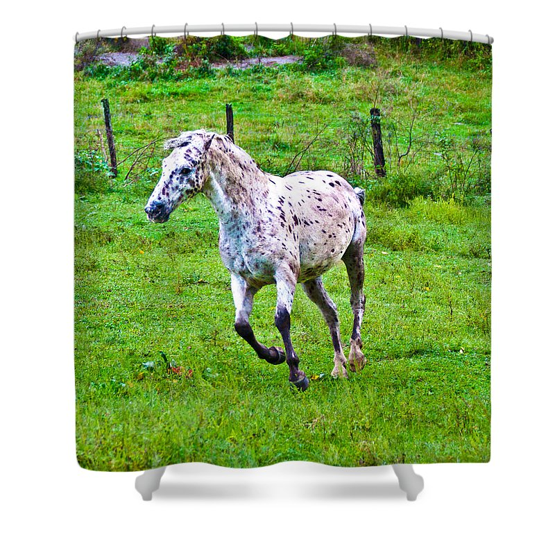 Horse Shower Curtain featuring the photograph Running It Off by Betsy Knapp