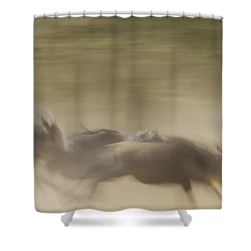 Wildebeest Shower Curtain featuring the photograph Running Wildebeest II by Boyd Norton