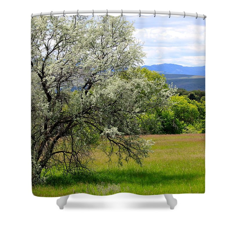 Tree Shower Curtain featuring the photograph Russian Olive by Karon Melillo DeVega