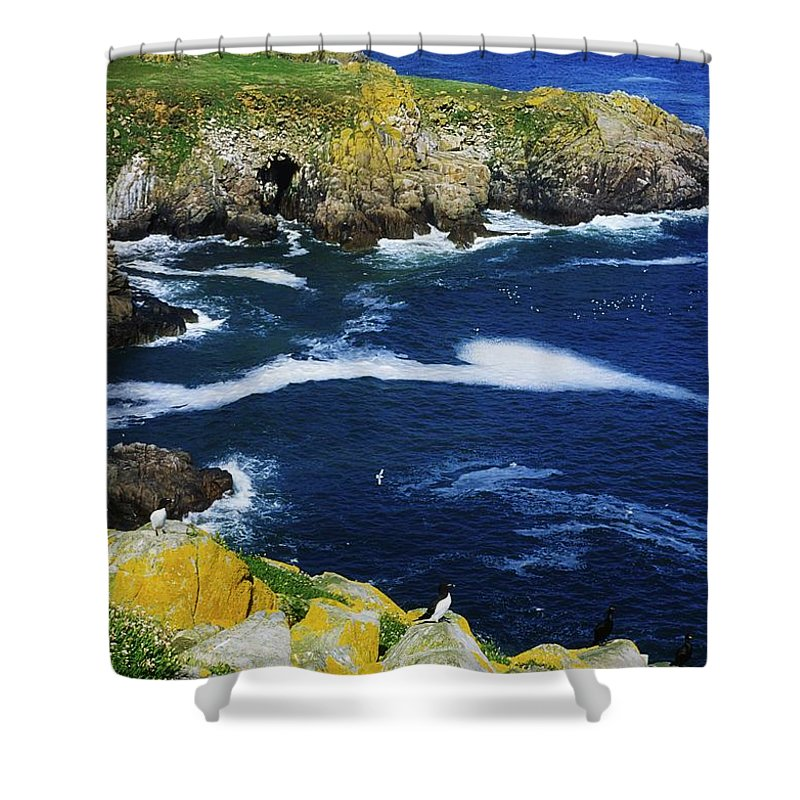 Bird Shower Curtain featuring the photograph Saltee Islands, Co Wexford, Ireland by The Irish Image Collection