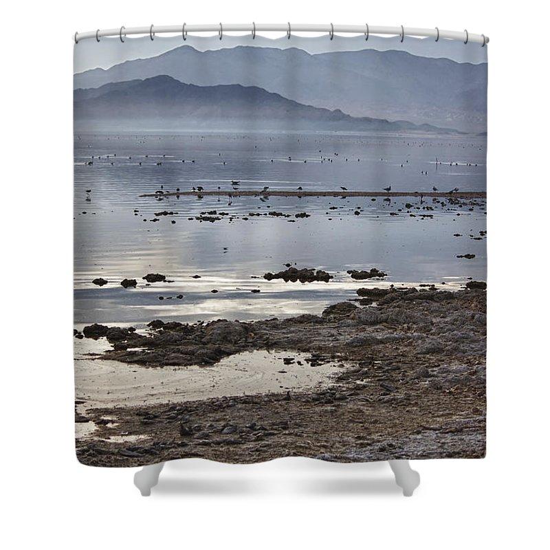 Seagulls Shower Curtain featuring the photograph Salton Sea Birds by Linda Dunn