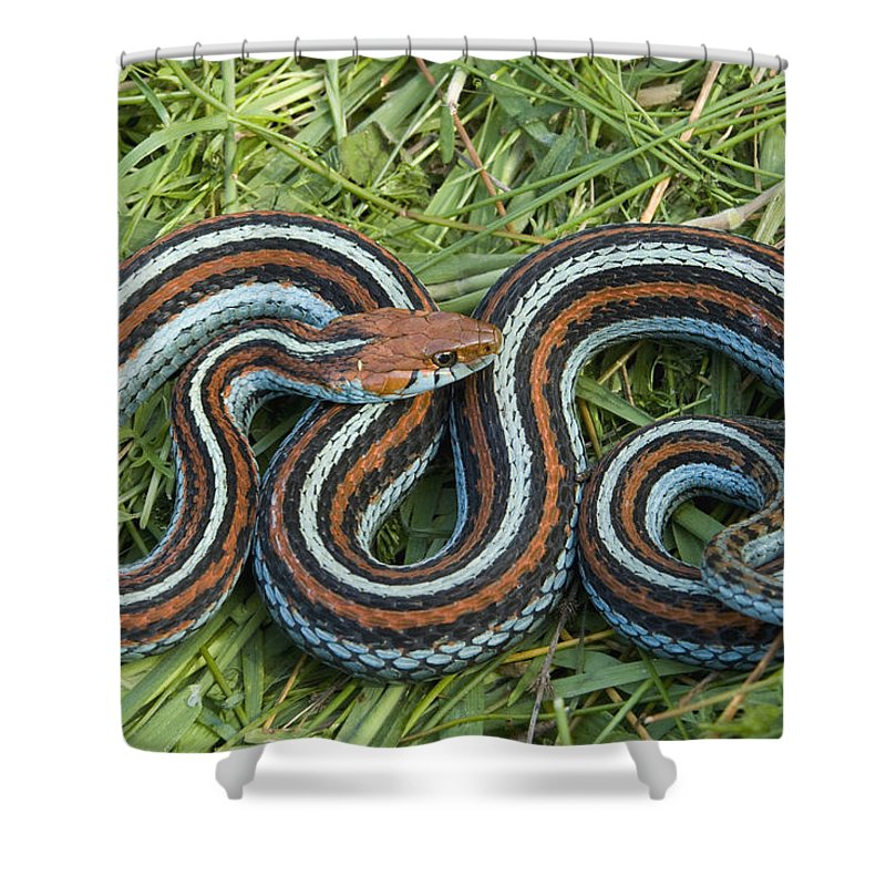San Francisco Garter Snake Pescadero Shower Curtain