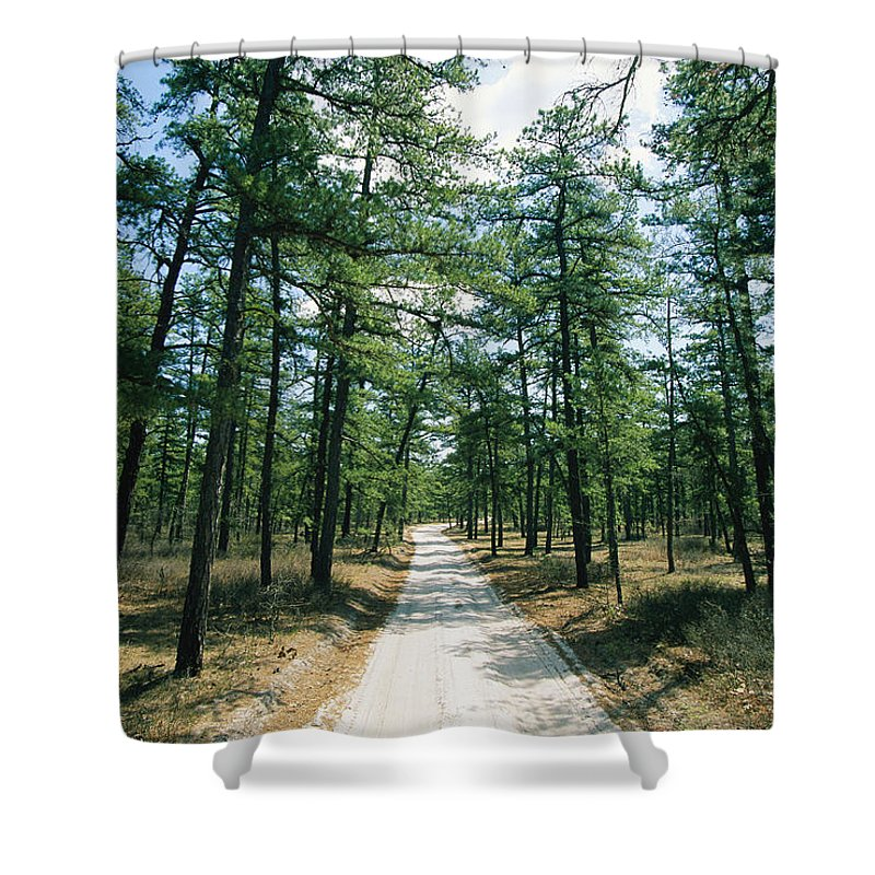Forests And Forestry Shower Curtain featuring the photograph Sand Road Through The Pine Barrens, New by Skip Brown