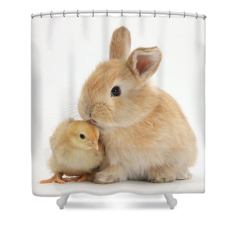 Sandy Rabbit Shower Curtain featuring the photograph Sandy Rabbit And Yellow Bantam Chick by Mark Taylor