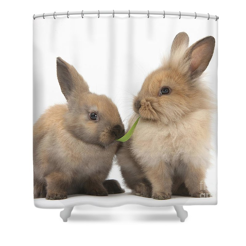 Animal Shower Curtain featuring the photograph Sandy Rabbits Sharing Grass by Mark Taylor