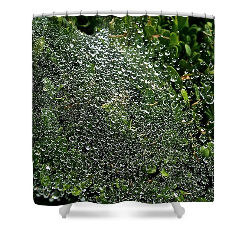 Outdoors Shower Curtain featuring the photograph Saturated Spider Web by Susan Herber