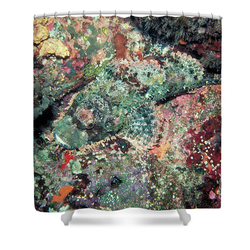 Scorpionfish Shower Curtain featuring the photograph Scorpionfish by Gregory G. Dimijian