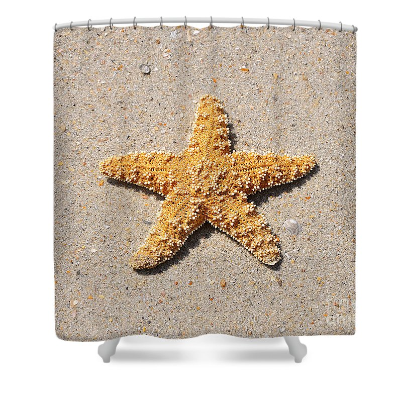 Sea Star Shower Curtain featuring the photograph Sea Star by Al Powell Photography USA