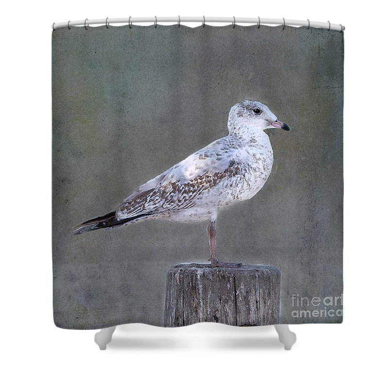 Seagull Shower Curtain featuring the photograph Seagull by Betty LaRue