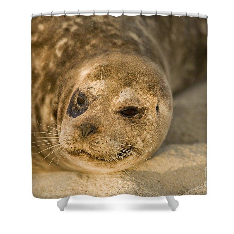 La Jolla Shower Curtain featuring the photograph Seal 1 by Daniel Knighton