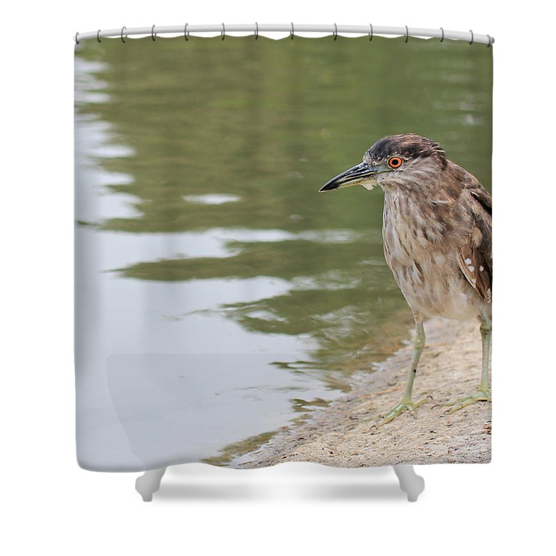 Bird Shower Curtain featuring the photograph Searching by Heidi Smith