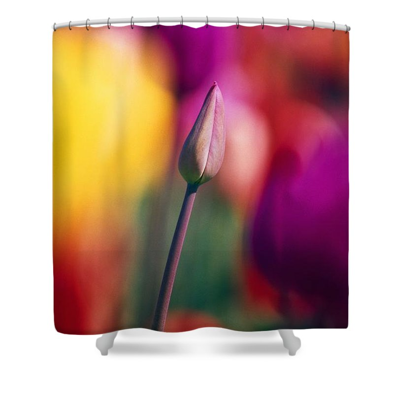 Outdoors Shower Curtain featuring the photograph Selective Focus Tulip Flower Field by Natural Selection Craig Tuttle