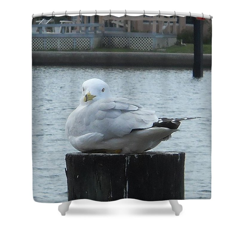 Bird Shower Curtain featuring the photograph Settled In by Judy Hall-Folde