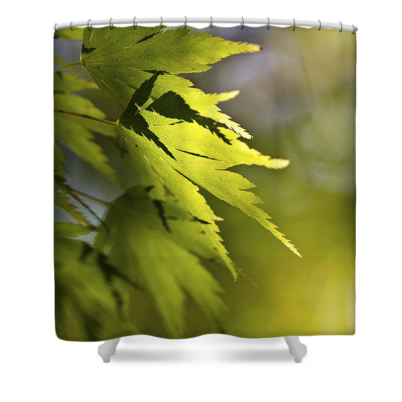 Green Shower Curtain featuring the photograph Shades Of Green And Gold. by Clare Bambers