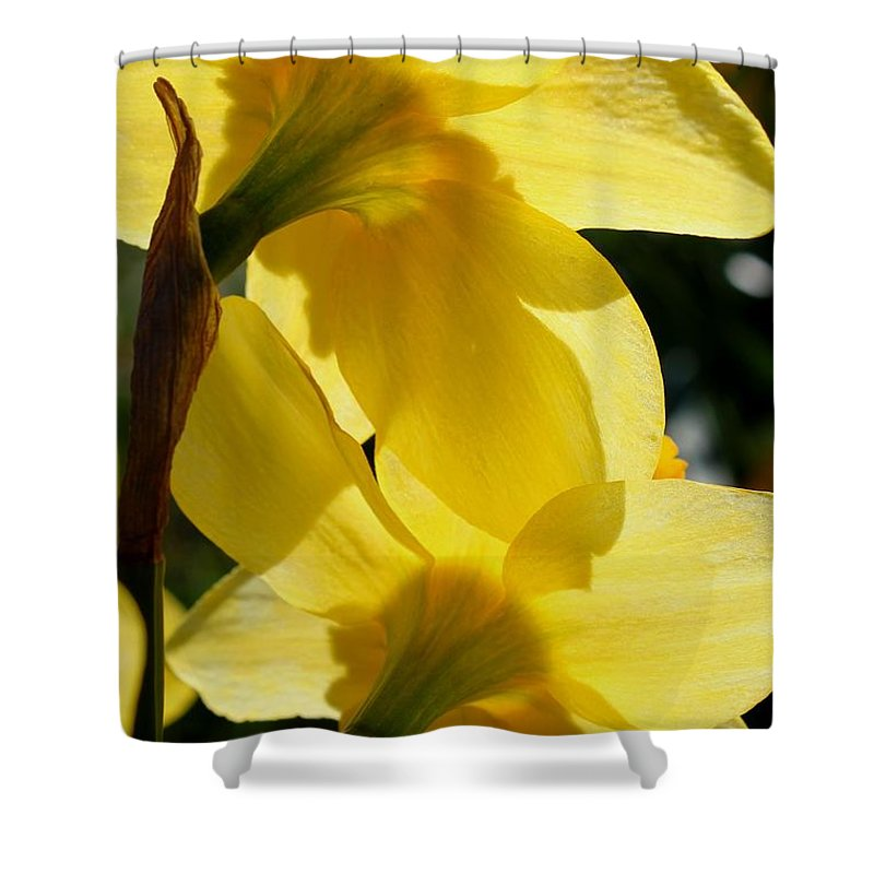 Daffodil Shower Curtain featuring the photograph Shadow Play by Betty Northcutt