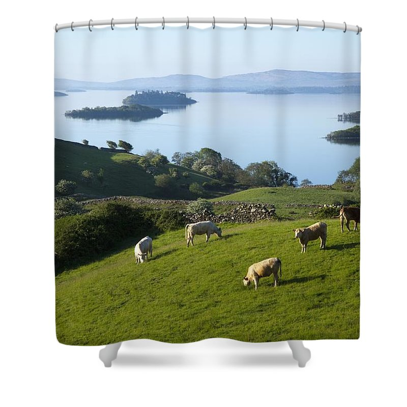 County Mayo Shower Curtain featuring the photograph Sheep Grazing By Lough Corrib Cong by Peter Zoeller