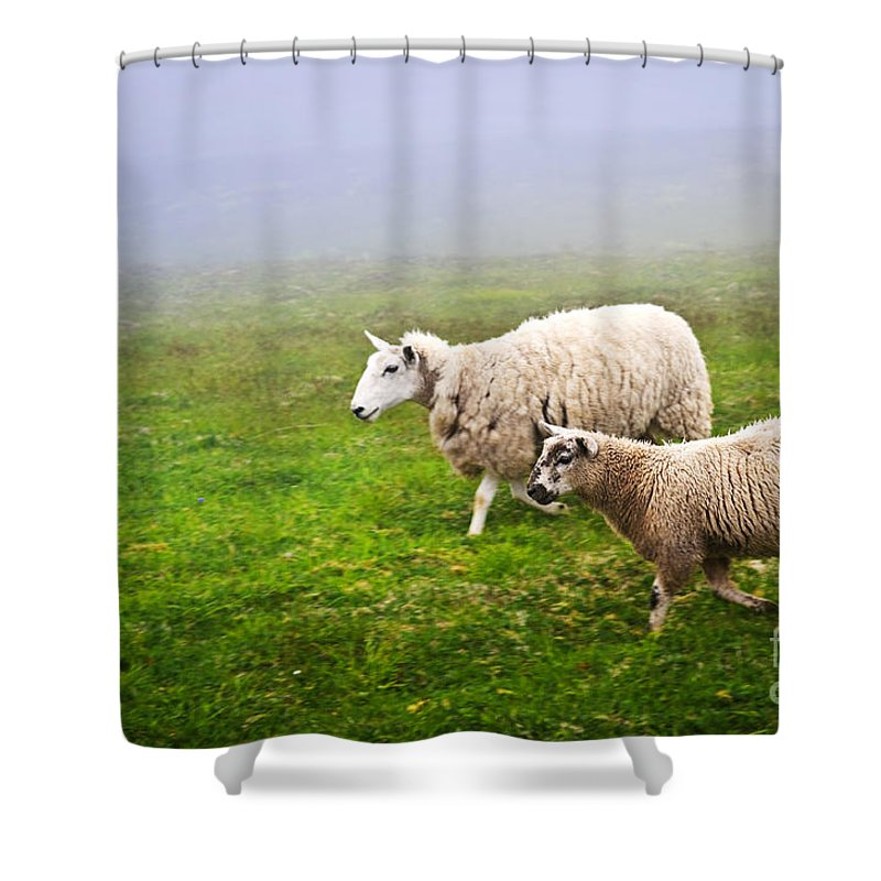 Sheep Shower Curtain Featuring The Photograph In Misty Meadow By Elena Elisseeva