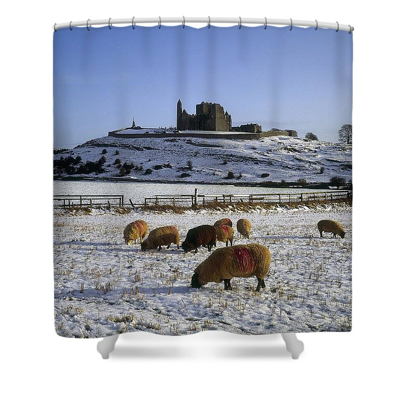 Animal Themes Shower Curtain featuring the photograph Sheep On A Snow Covered Landscape In by The Irish Image Collection