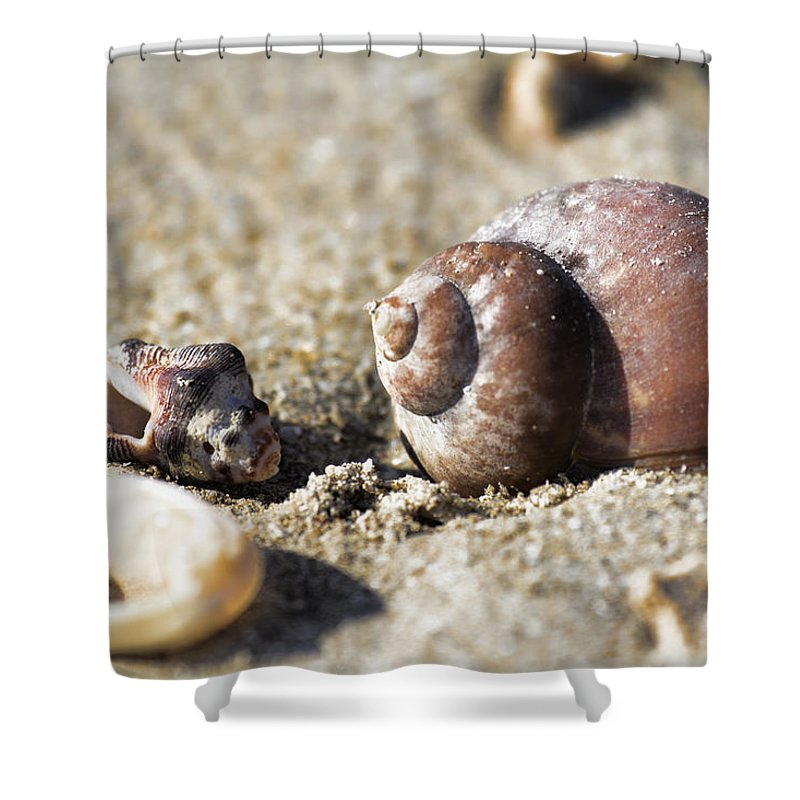 Shells Shower Curtain featuring the photograph Shells by Douglas Barnard