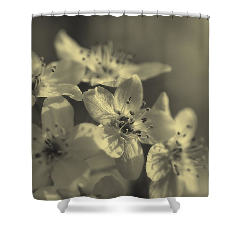 Calleryanna Shower Curtain featuring the photograph Shimmering Callery Pear Blossoms by Kathy Clark