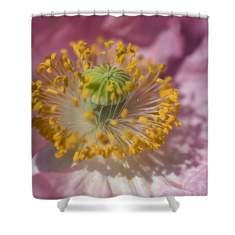 Close-up Shower Curtain featuring the photograph Shirley Poppy by Craig Tuttle