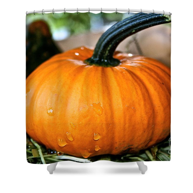 Outdoors Shower Curtain featuring the photograph Shower Fresh by Susan Herber