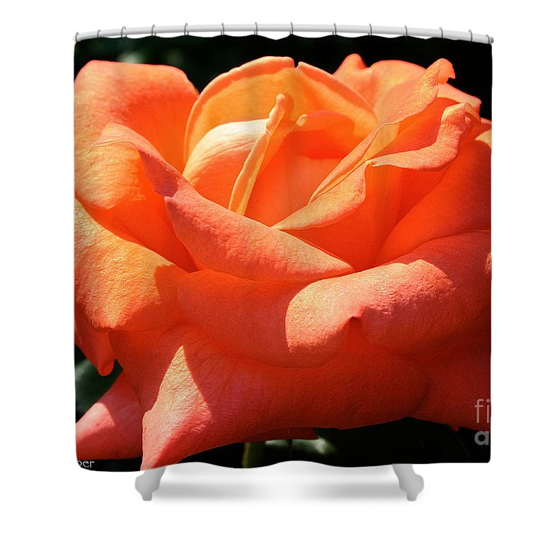Outdoors Shower Curtain featuring the photograph Shreveport Rose by Susan Herber