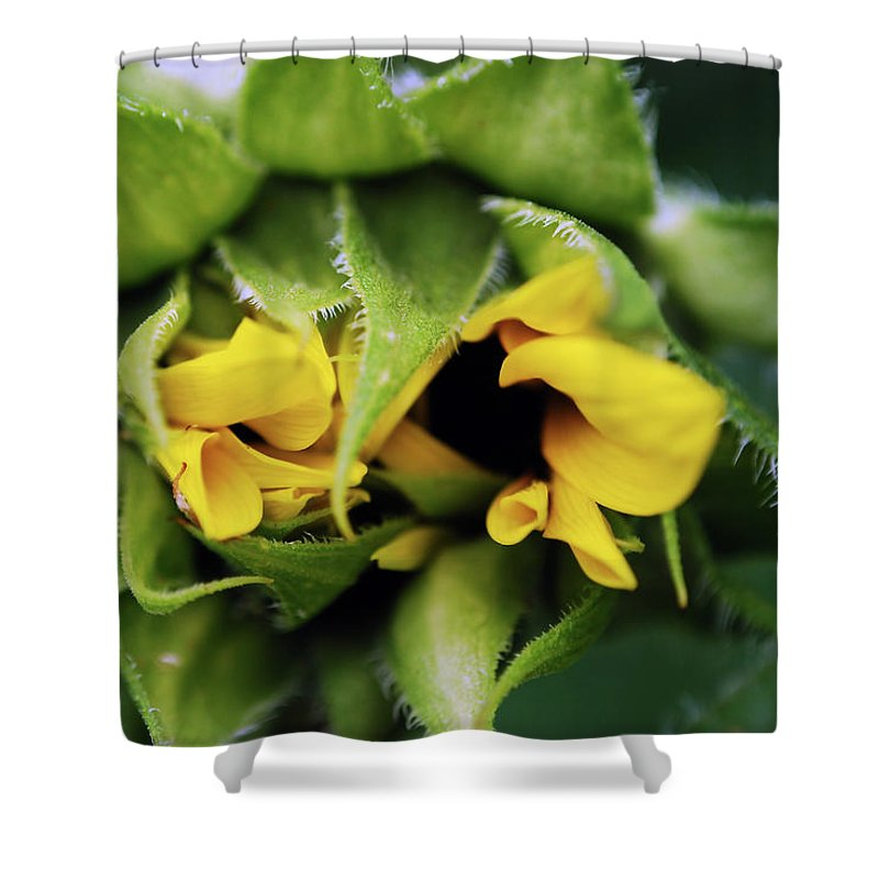 Sunflower Shower Curtain featuring the photograph Shy by Lori Tambakis