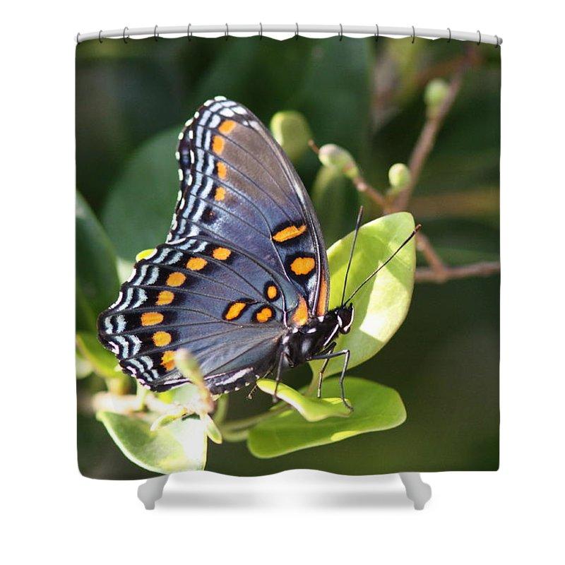 Shower Curtain featuring the photograph Sideways by Travis Truelove