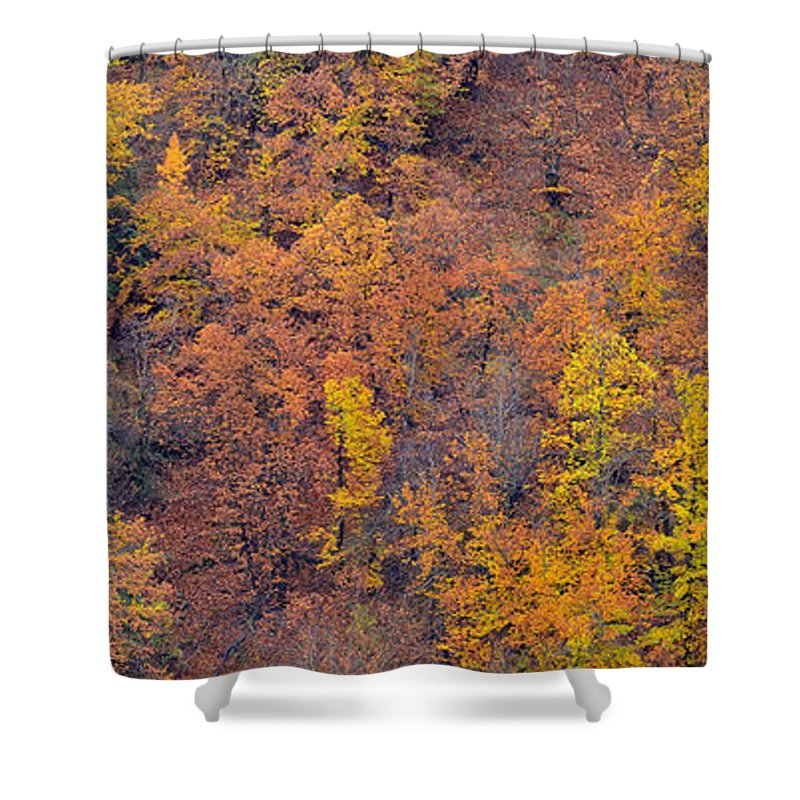 Trees Shower Curtain featuring the photograph Sierra Nevada National Park by Guido Montanes Castillo