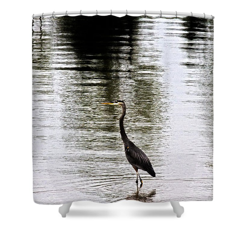 Blue Heron Shower Curtain featuring the photograph Silver Lake by Douglas Barnard