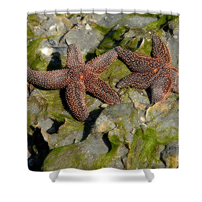 Starfish Shower Curtain featuring the photograph Simply Starfish by Melody Jones