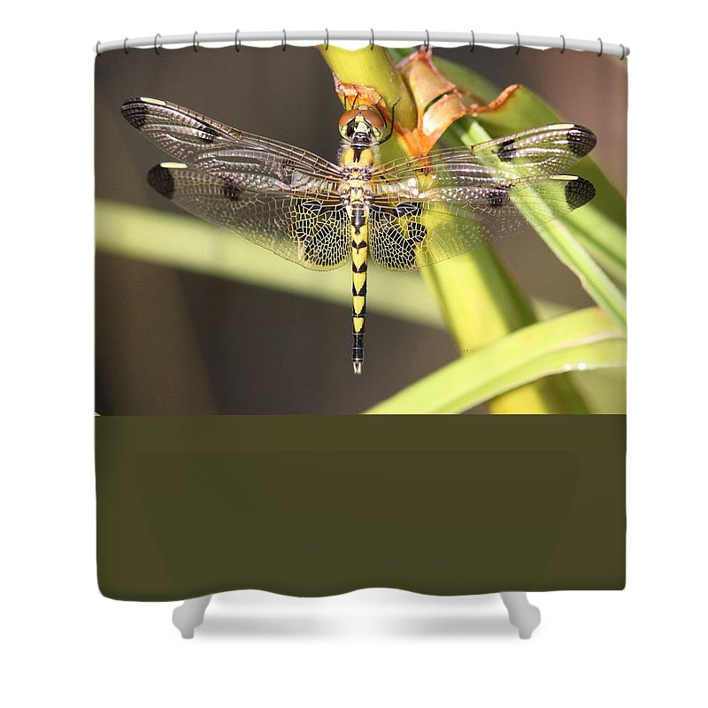 Shower Curtain featuring the photograph Sitting Pretty by Travis Truelove