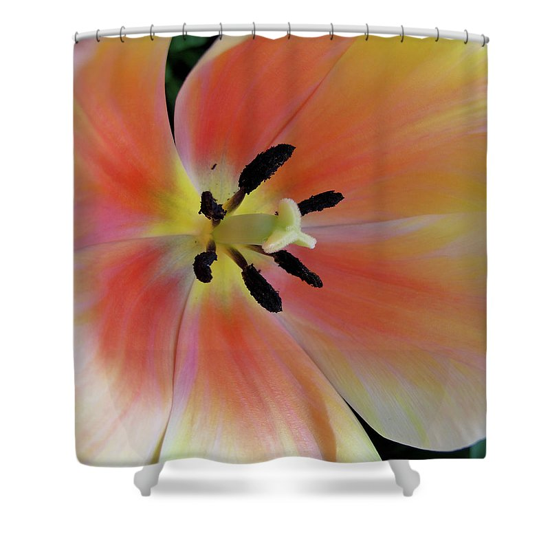 Tulip Shower Curtain featuring the photograph Smooth And Silky by Rachel Cohen