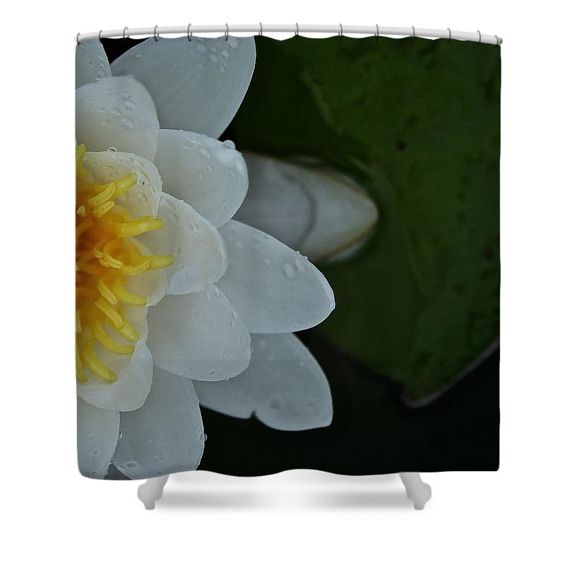 Outdoors Shower Curtain featuring the photograph Sneaking In by Susan Herber