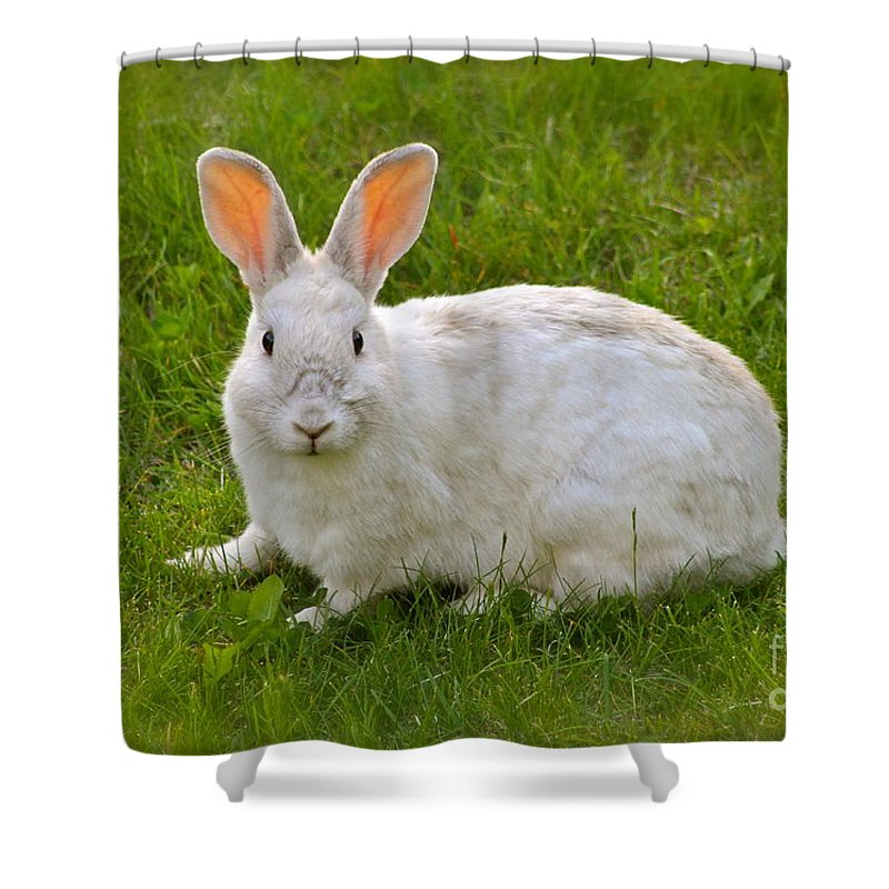 Rabbit Shower Curtain featuring the photograph Snow Ball by Rick Monyahan