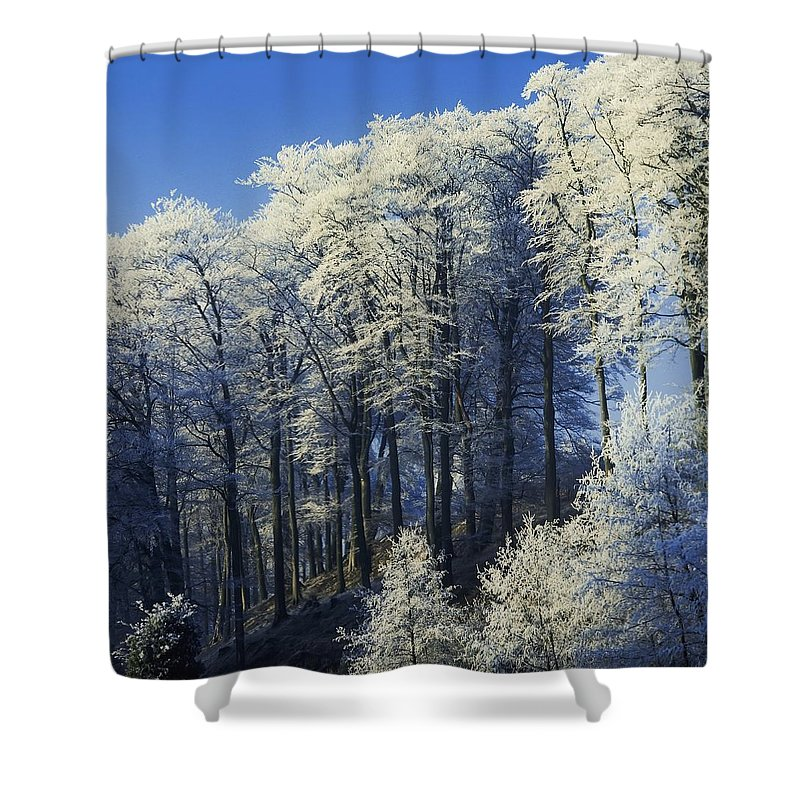 Co Antrim Shower Curtain featuring the photograph Snow Covered Trees In A Forest, County by The Irish Image Collection