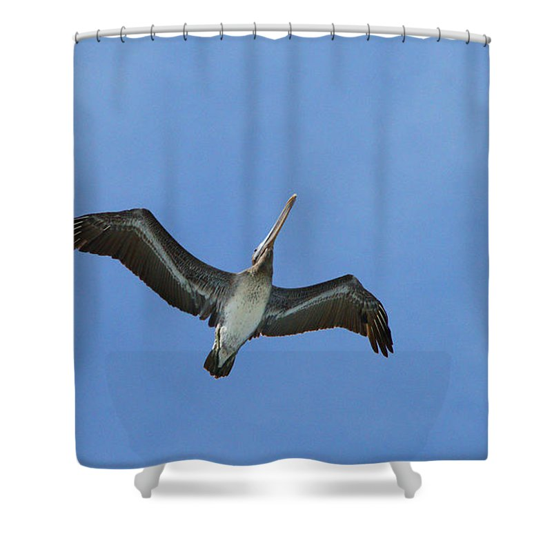 Birds Shower Curtain featuring the photograph Soaring Pelican by Randy Harris