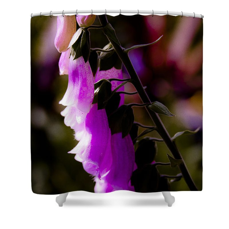 Pink Shower Curtain featuring the photograph Soft Cascade by David Patterson