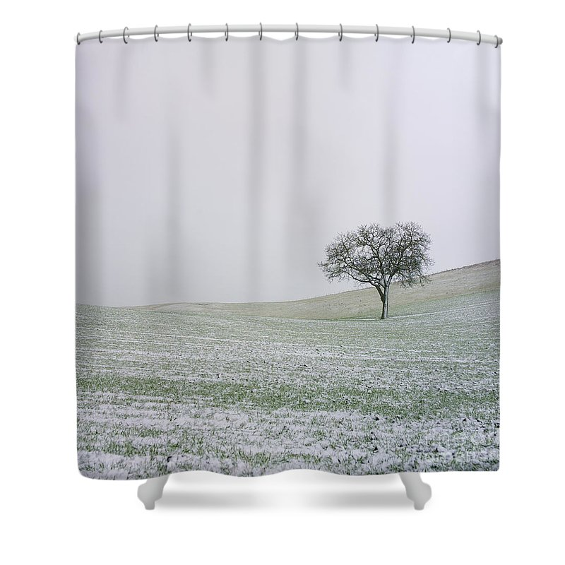 Wintry Shower Curtain featuring the photograph Solitary Tree In Winter by Bernard Jaubert