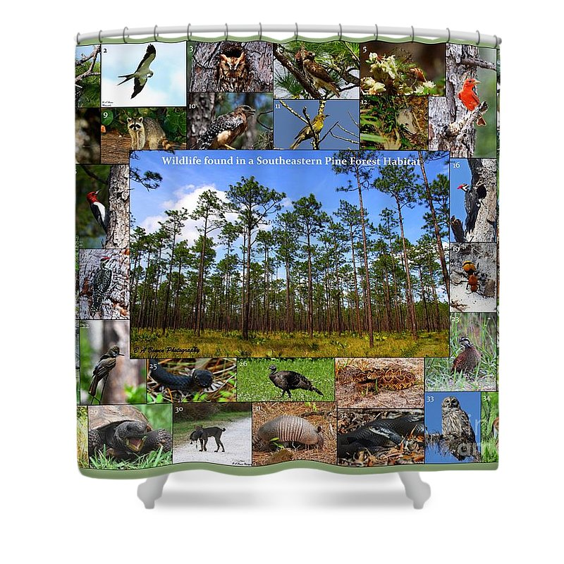 Pine Forest Shower Curtain featuring the photograph Southeastern Pine Forest Wildlife Poster by Barbara Bowen