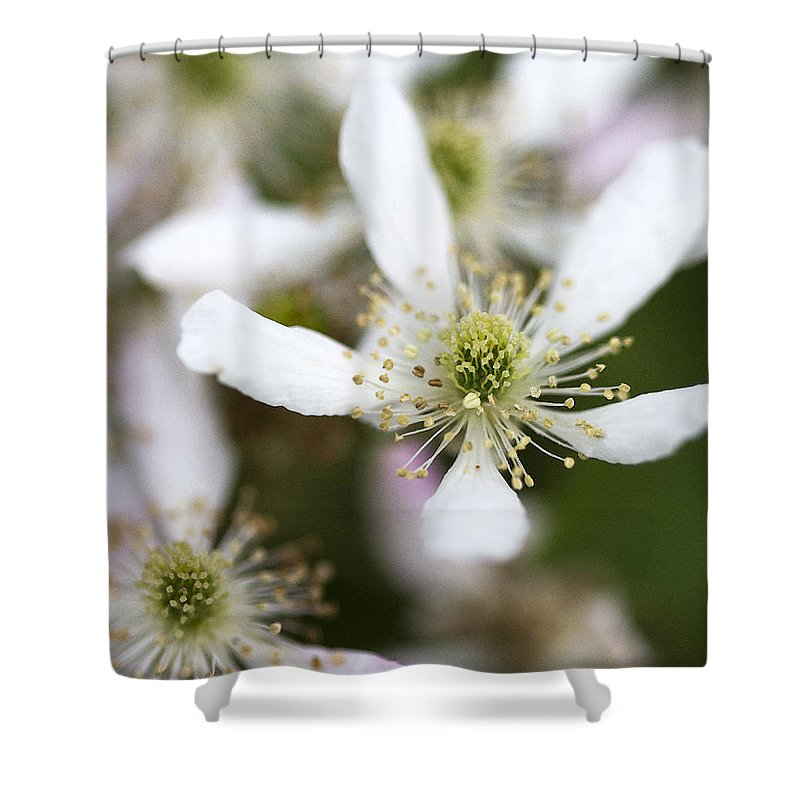 Rubus Argutus Shower Curtain featuring the photograph Southern Highbush Blackberry Blossoms - Rubus Argutus by Kathy Clark