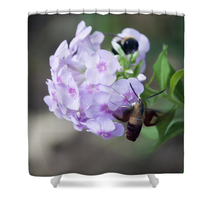 Sphingidae Shower Curtain featuring the photograph Sphinx Moth 2 by Teresa Mucha