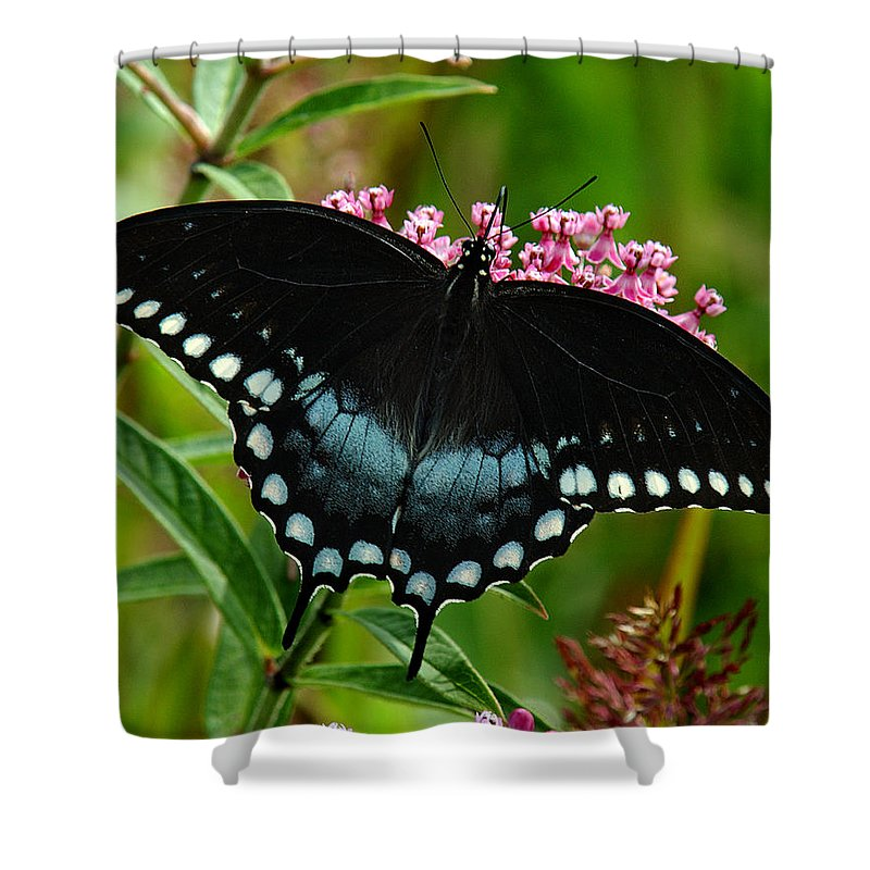 Nature Shower Curtain featuring the photograph Spicebush Swallowtail Din038 by Gerry Gantt