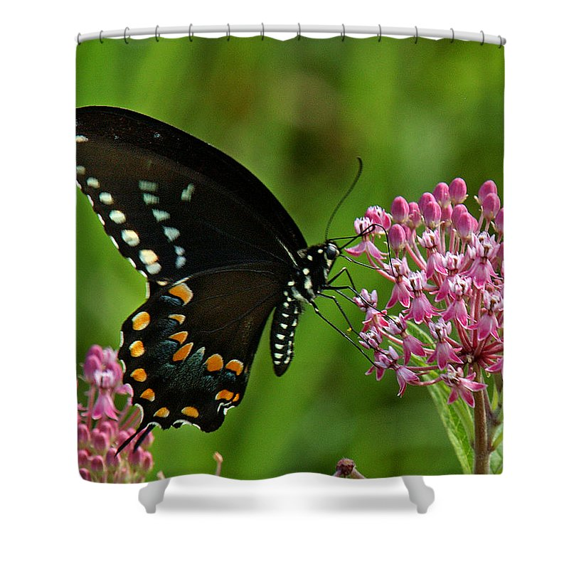 Nature Shower Curtain featuring the photograph Spicebush Swallowtail Din039 by Gerry Gantt