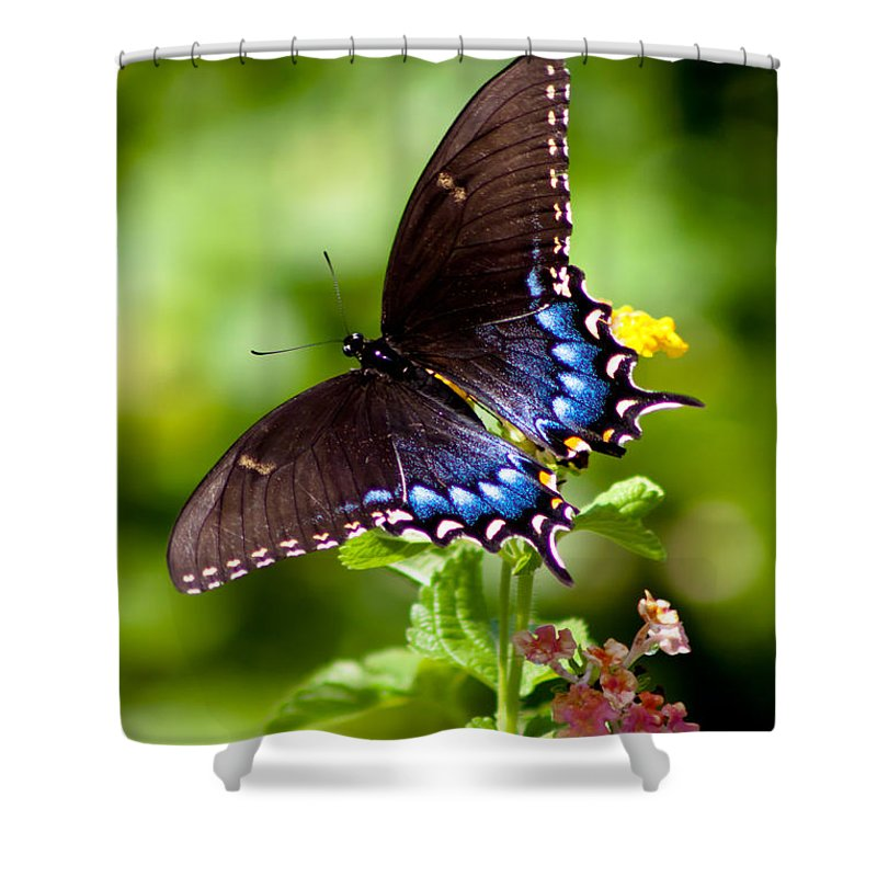 Butterfly Shower Curtain featuring the photograph Spicebush Swallowtail by Lynne Jenkins